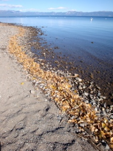 a fall shoreline